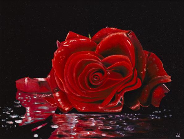 eternity-red-rose-46hx61w-c